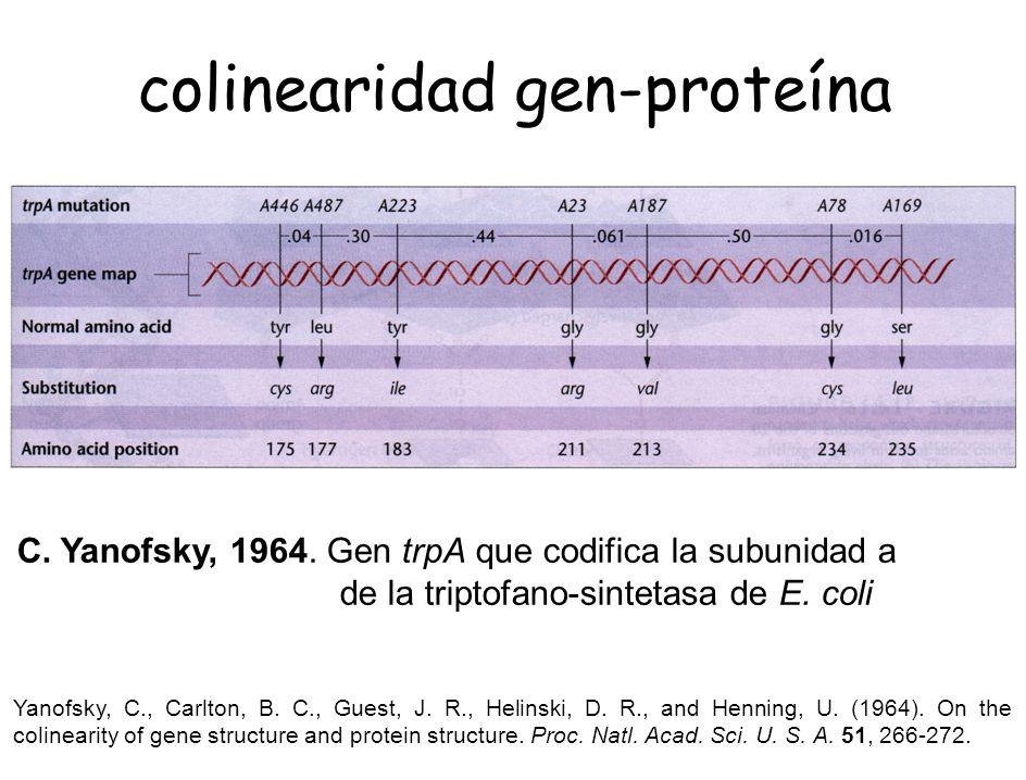colinearidad gen-proteína
