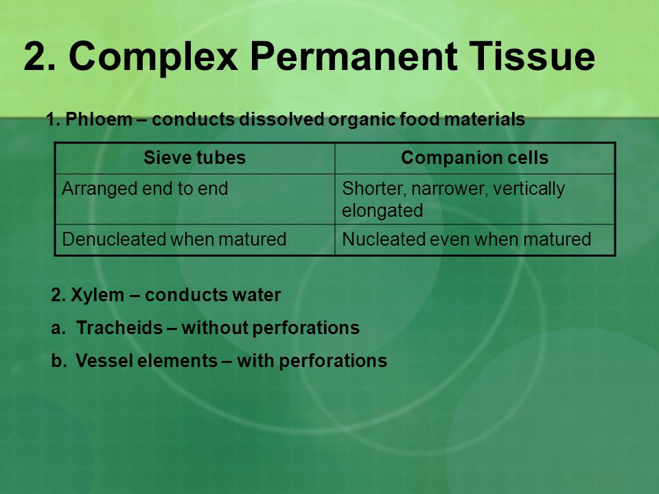 2. Complex Permanent Tissue