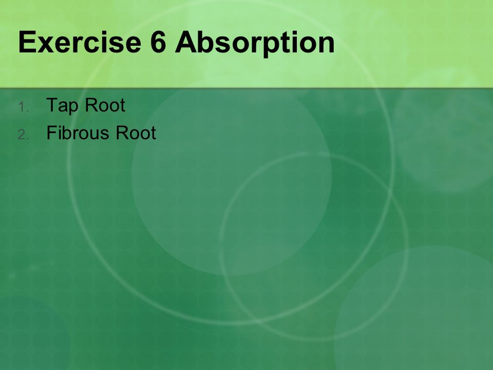 Exercise 6 Absorption Tap Root Fibrous Root