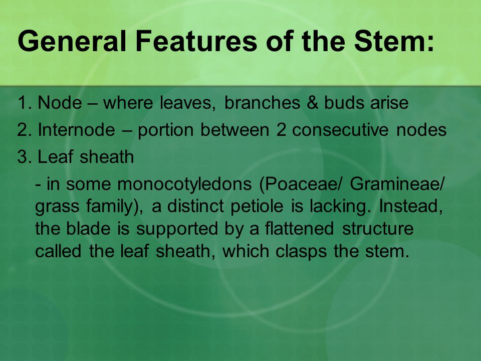 General Features of the Stem: