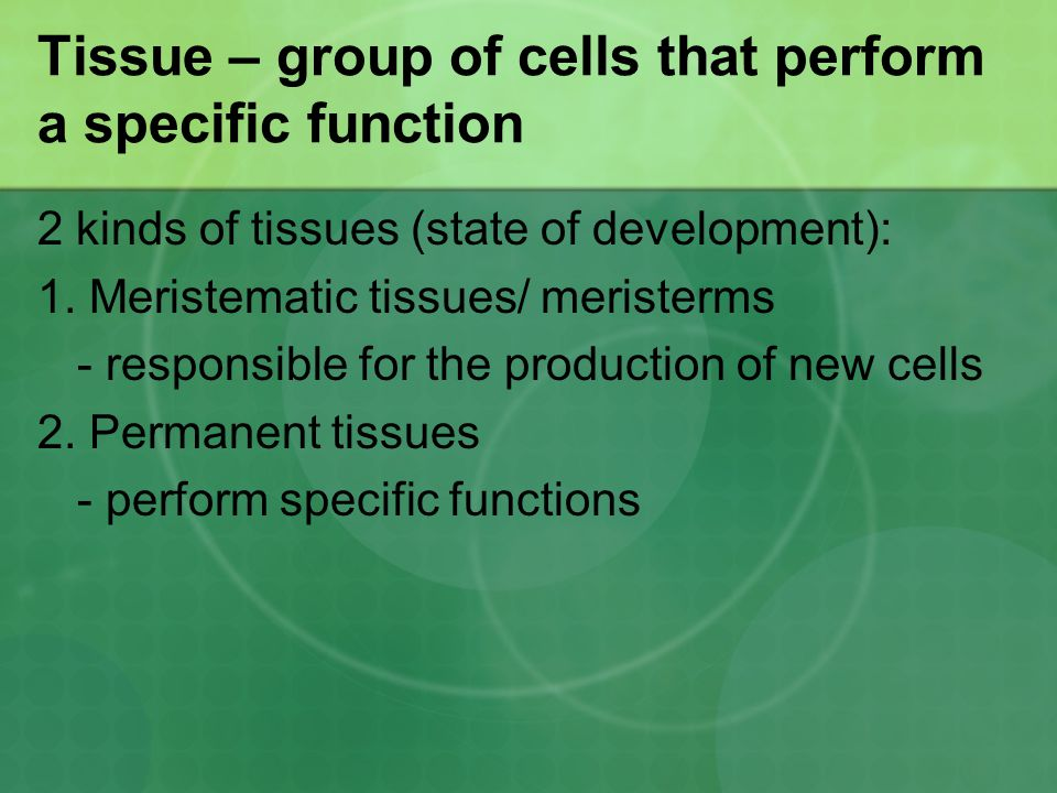 Tissue – group of cells that perform a specific function