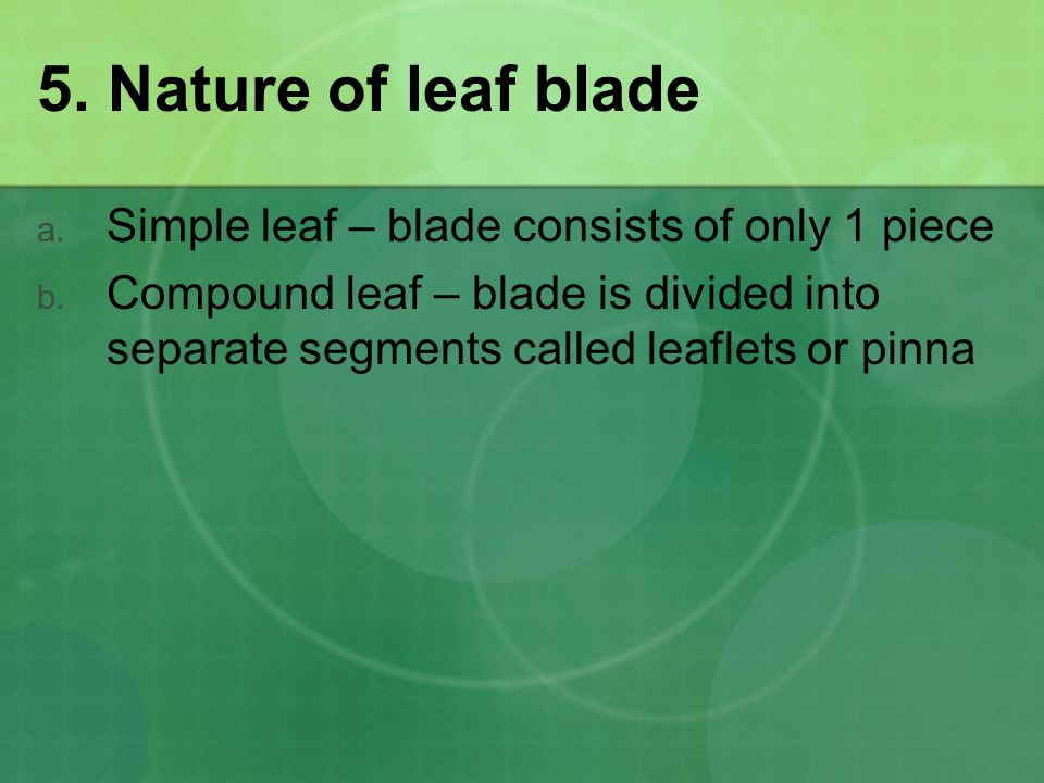 5. Nature of leaf blade Simple leaf – blade consists of only 1 piece