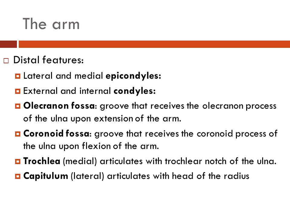 The arm Distal features: Lateral and medial epicondyles: