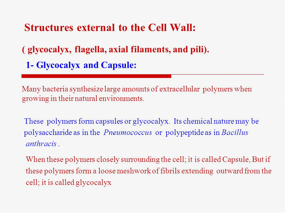 Structures external to the Cell Wall: