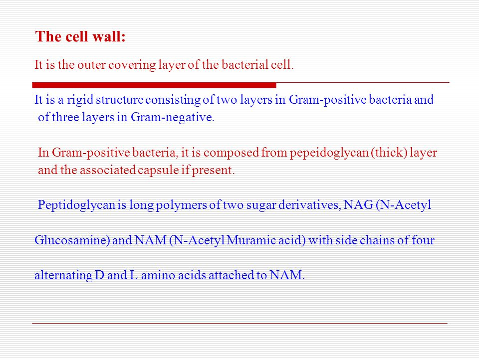 The cell wall: It is the outer covering layer of the bacterial cell.