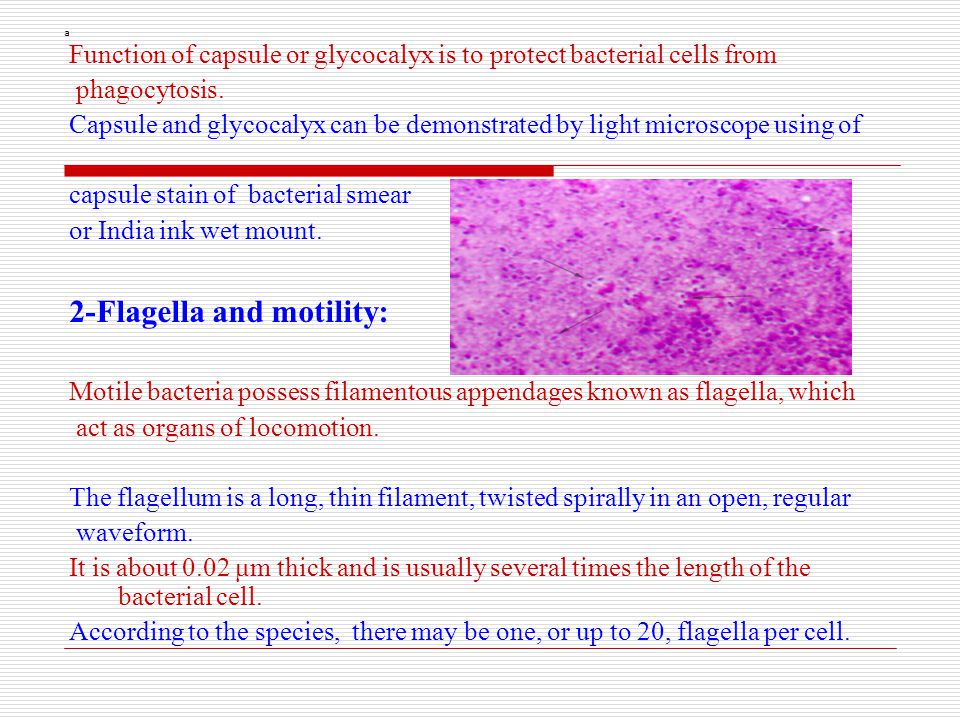 2-Flagella and motility: