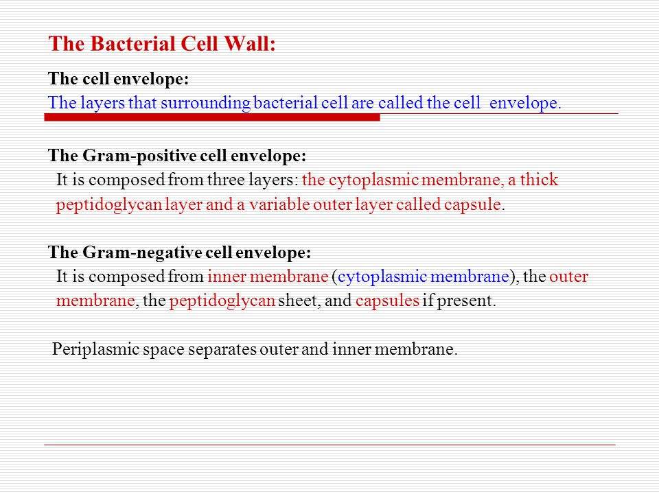 The Bacterial Cell Wall: