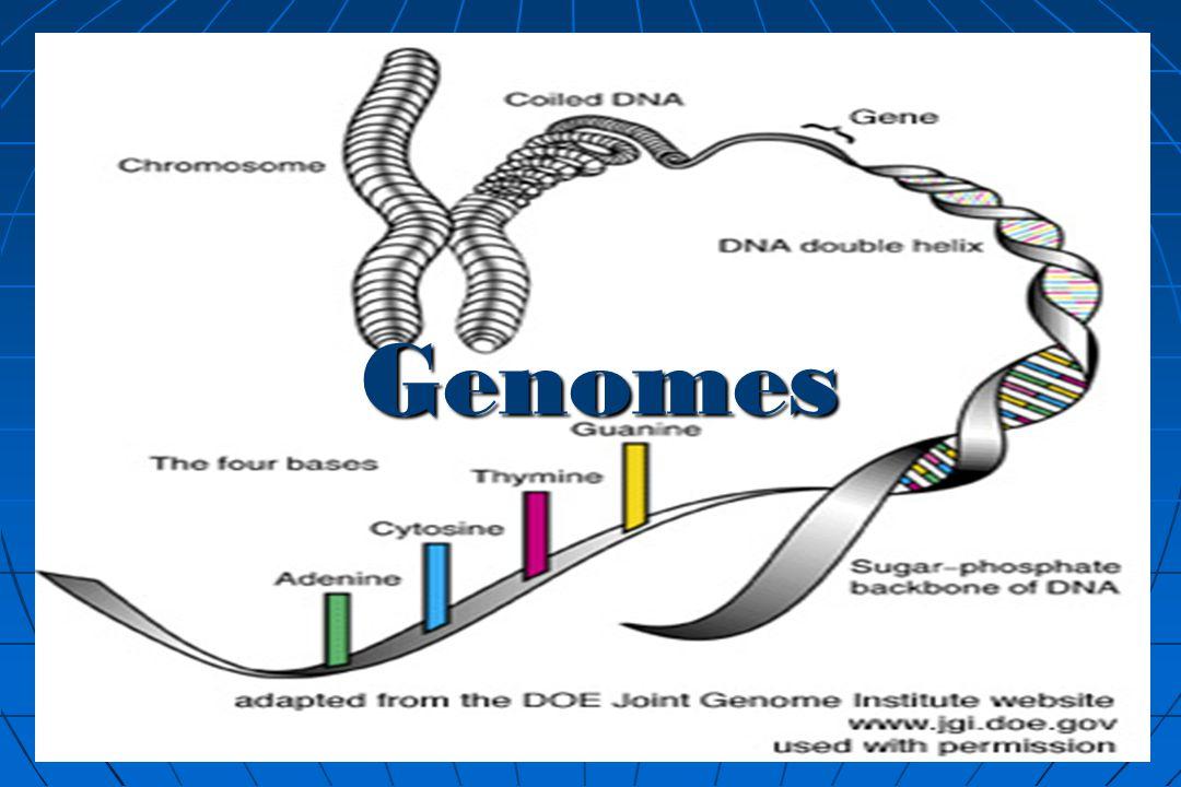 GENOMICS DEFINITION PDF DOWNLOAD