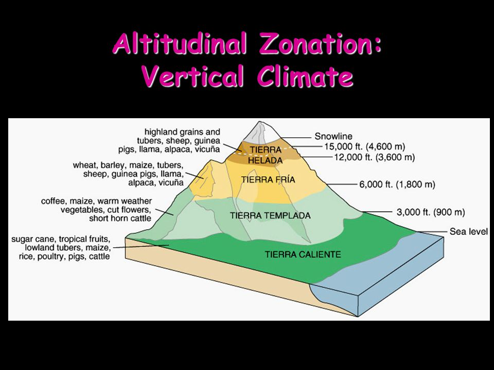 Altitudinal Zonation: Vertical Climate