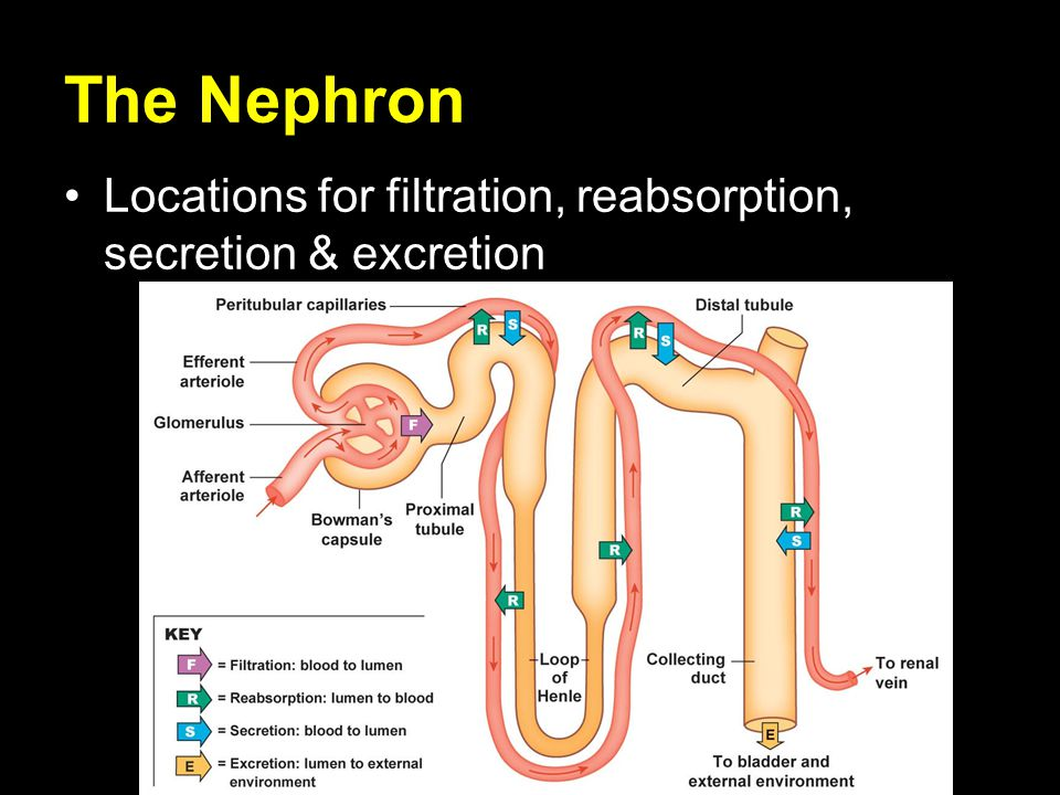 advantages of nephron technology Log in using the email address and password you registered with in order to access your online classes.