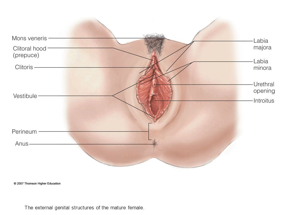 Womens Sexual Anatomy 24