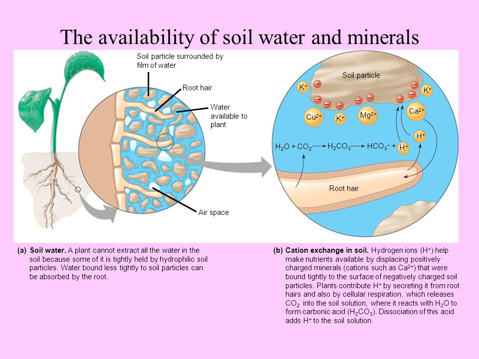 Soil and plant nutrition ch ppt video online download for What are soil minerals