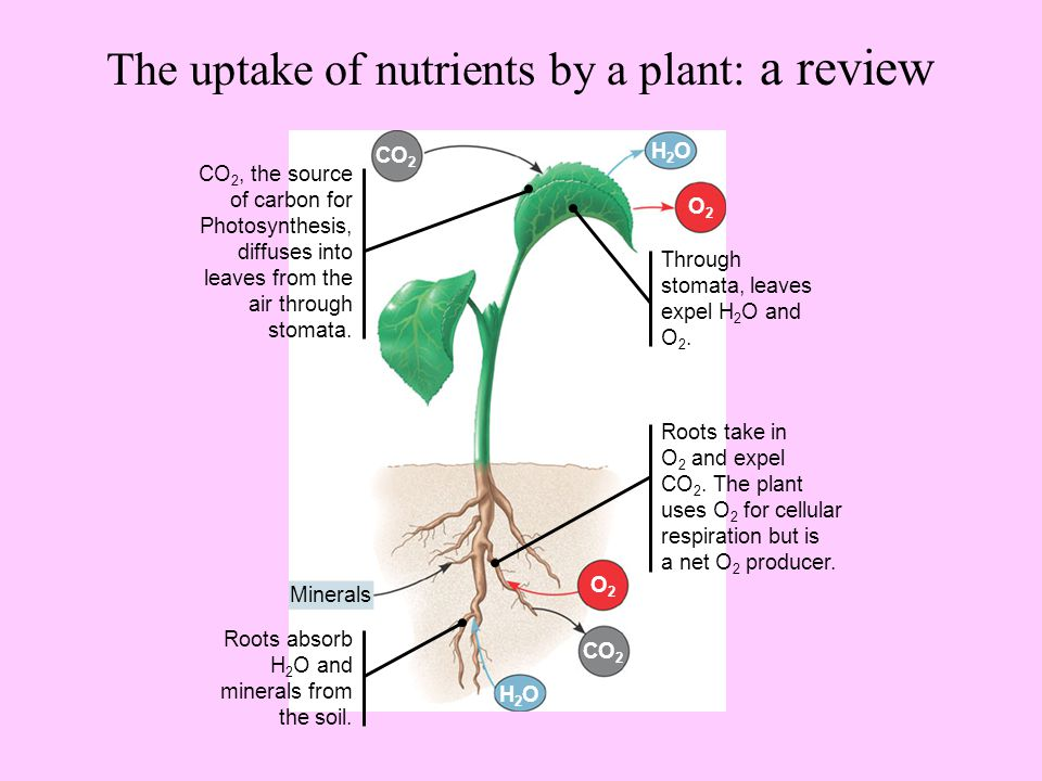 Soil and plant nutrition ch ppt video online download for Soil nutrients