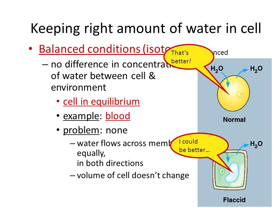 Keeping right amount of water in cell