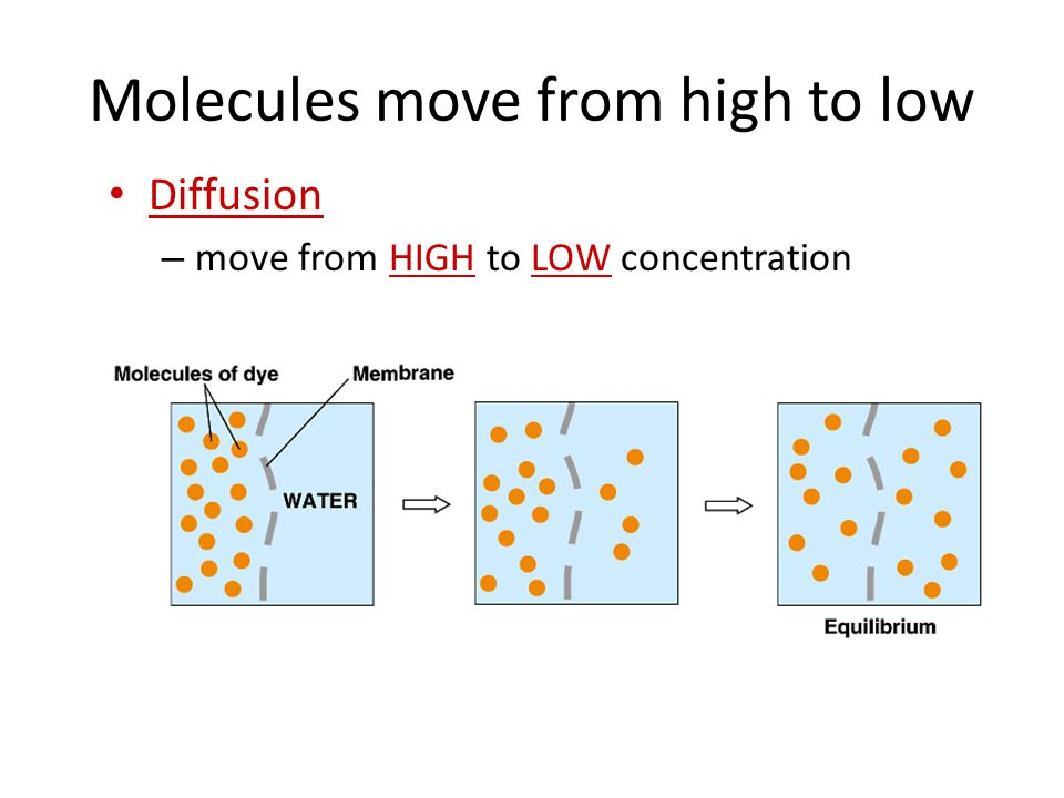 Molecules move from high to low