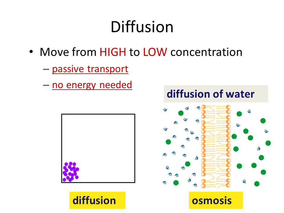 Diffusion Move from HIGH to LOW concentration diffusion of water