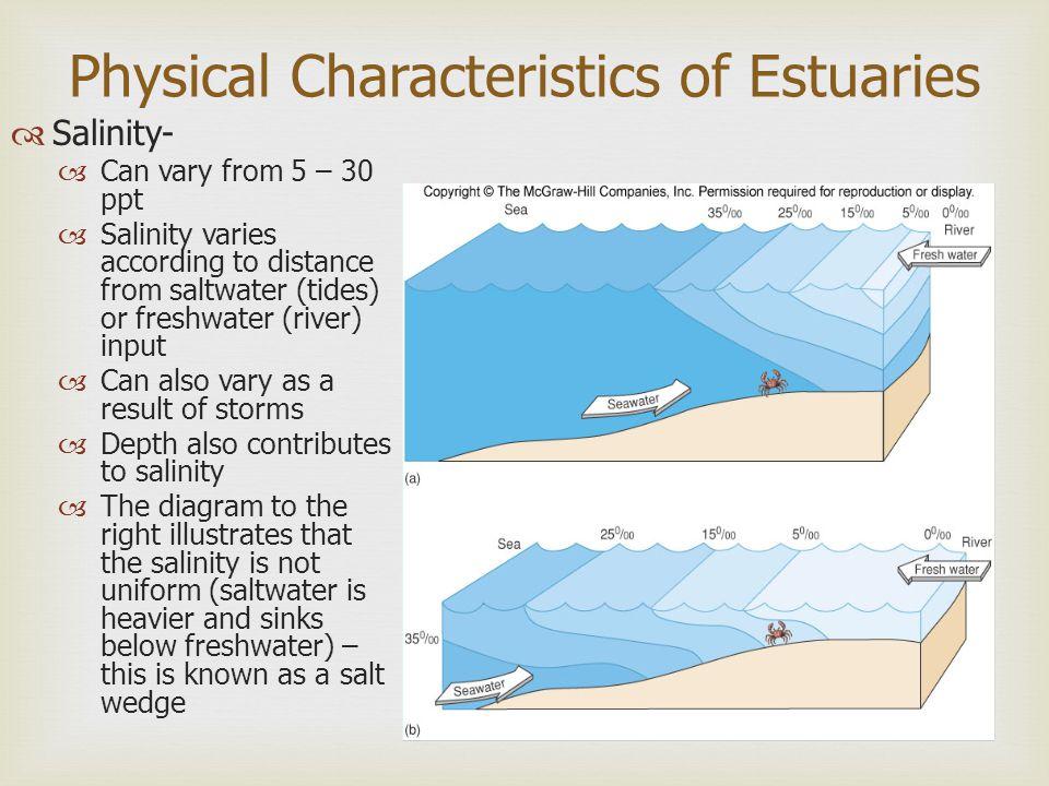 Estuaries Shipley Marine Biology - ppt download