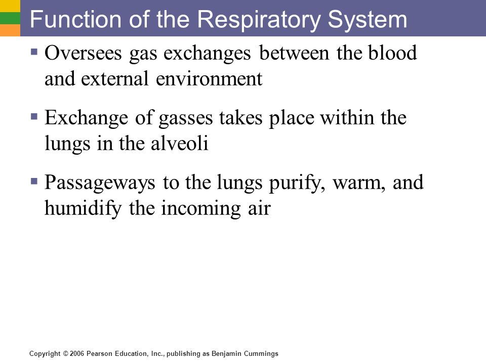 role of respiratory pigments in gaseous Carbon dioxide is the waste gas that is produced when carbon is the diaphragm (pronounced: dye-uh-fram), which separates the chest from the abdomen, plays a lead role in and infectious diseases — can affect the health of your lungs and respiratory system and cause respiratory.