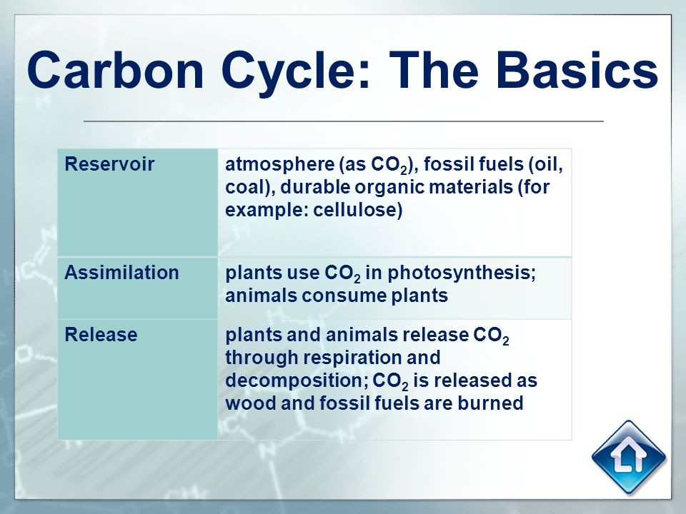 Carbon dating basics