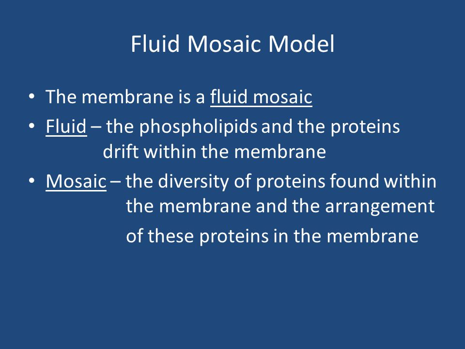 Fluid Mosaic Model The membrane is a fluid mosaic