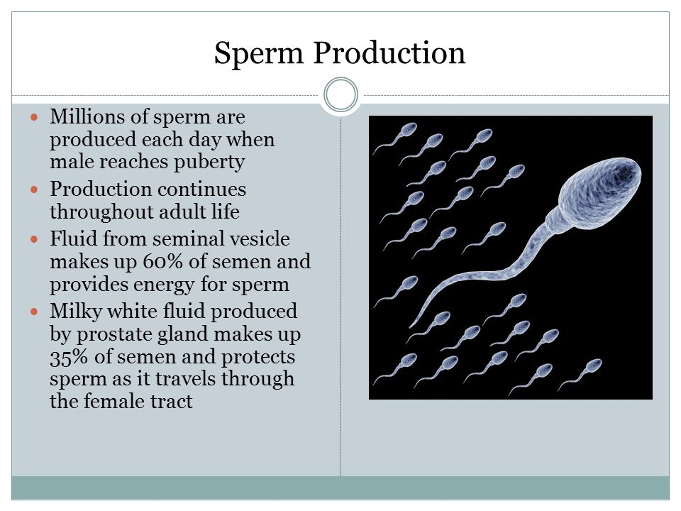 How Is Sperm Produced? LIVESTRONGCOM