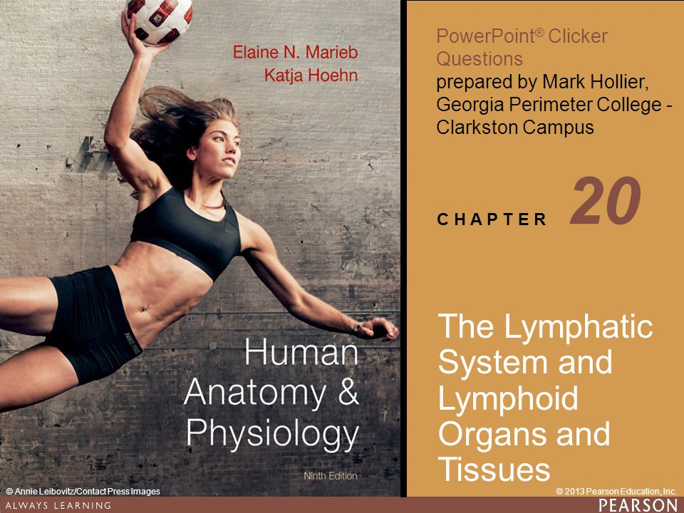 20 The Lymphatic System and Lymphoid Organs and Tissues