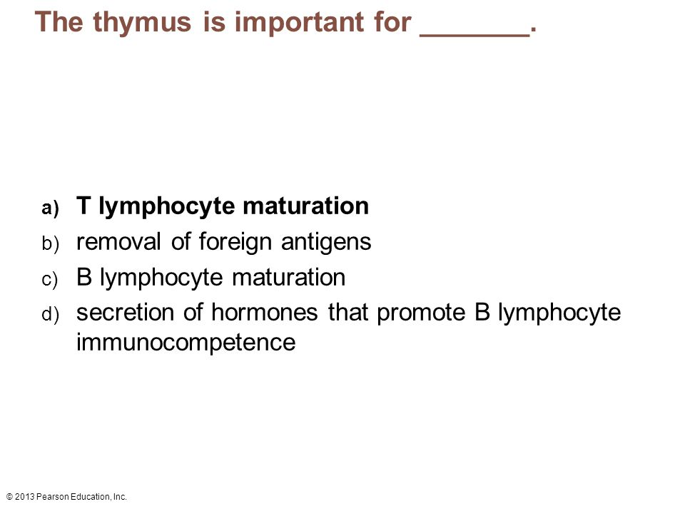 The thymus is important for _______.