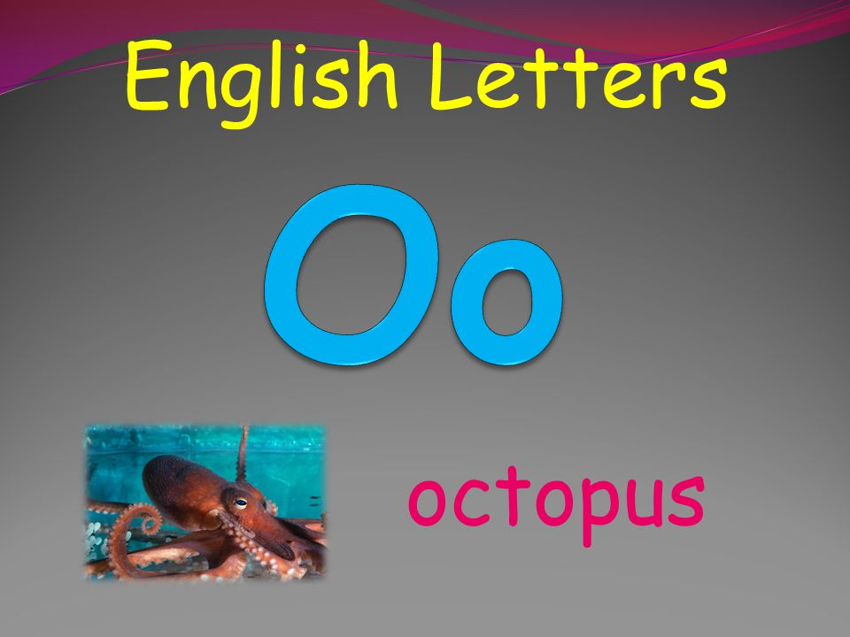 English Letters Oo octopus