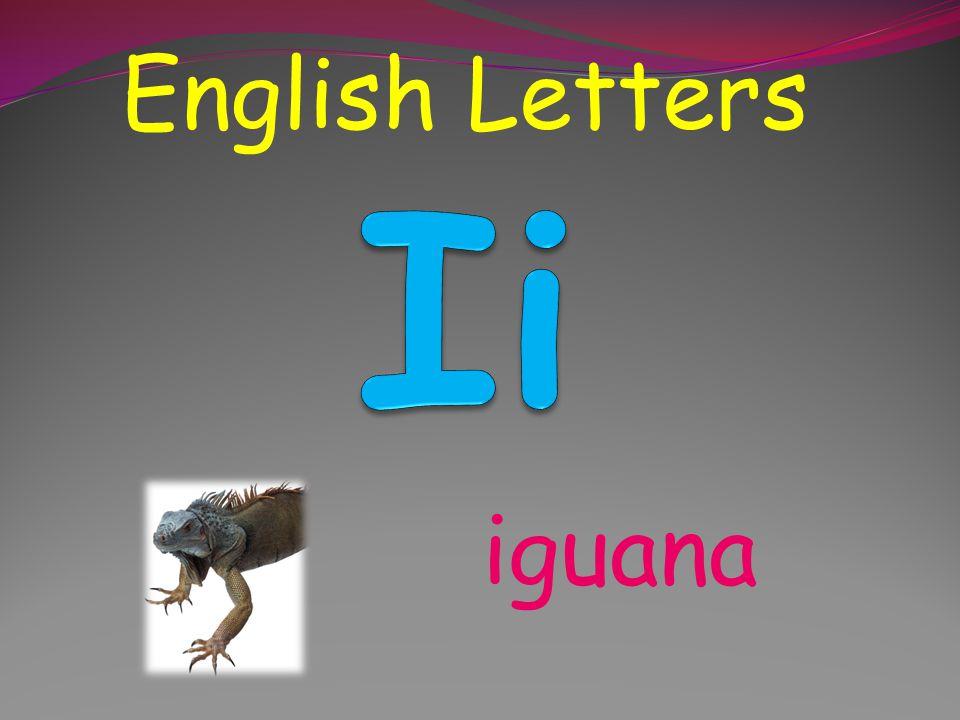 English Letters Ii iguana