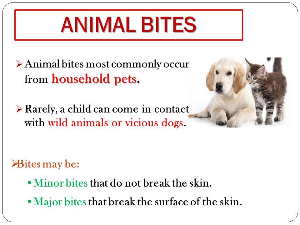 Minor dog bites