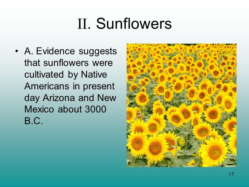II. Sunflowers A.