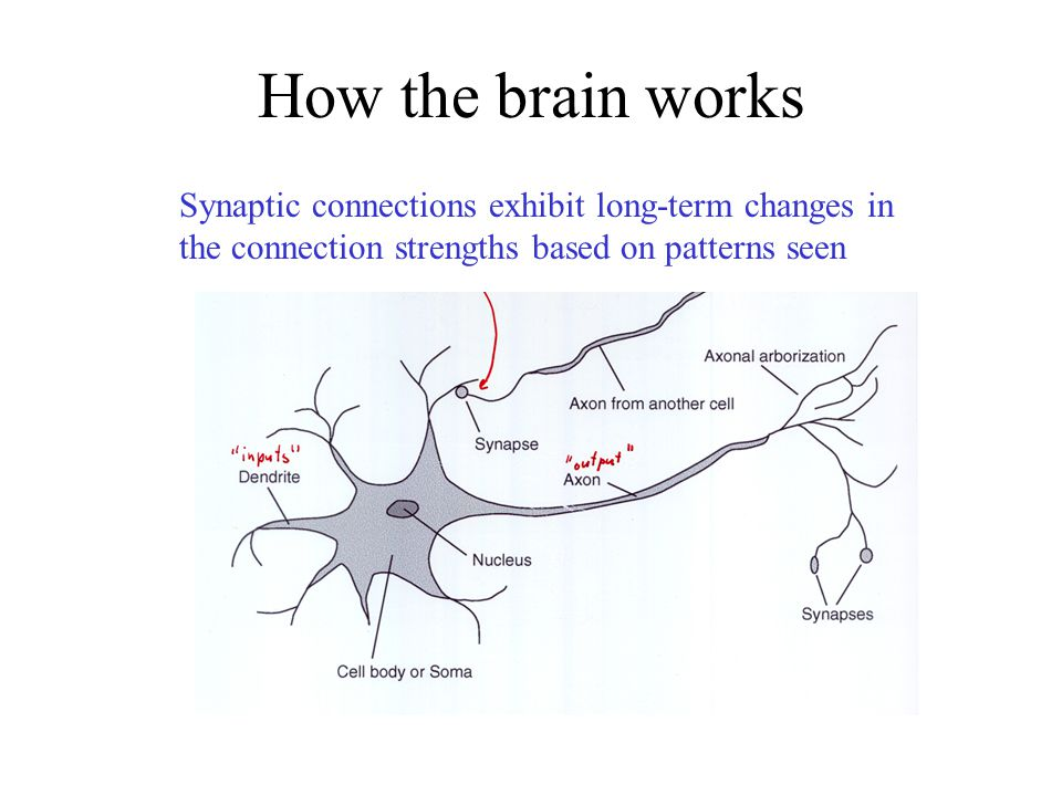 How the brain works Synaptic connections exhibit long-term changes in the connection strengths based on patterns seen.