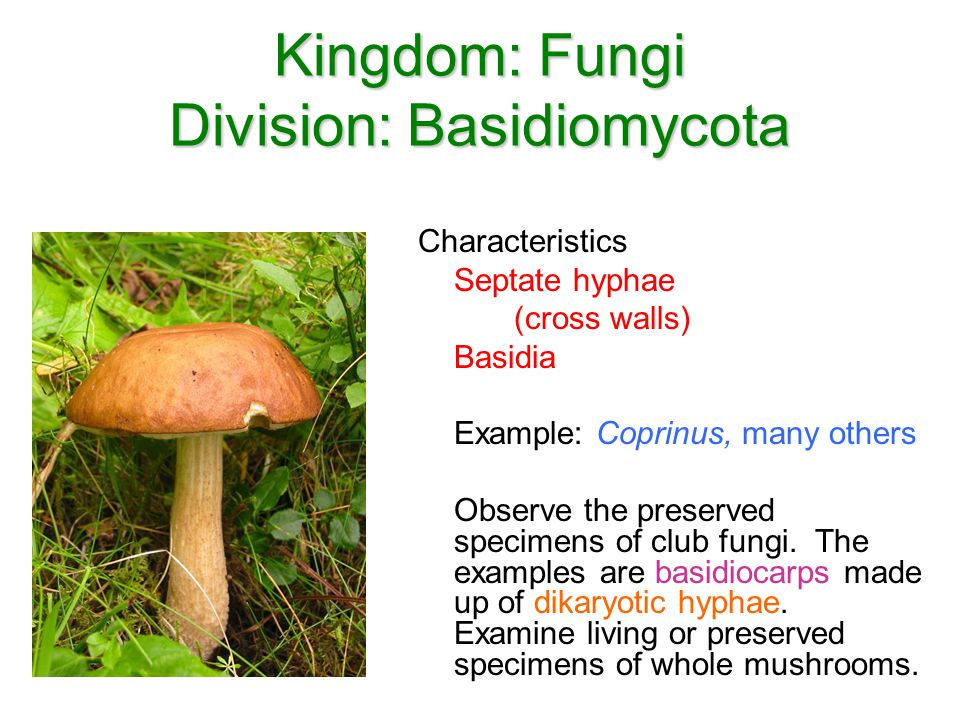 Characteristics Of Kingdom Fungi