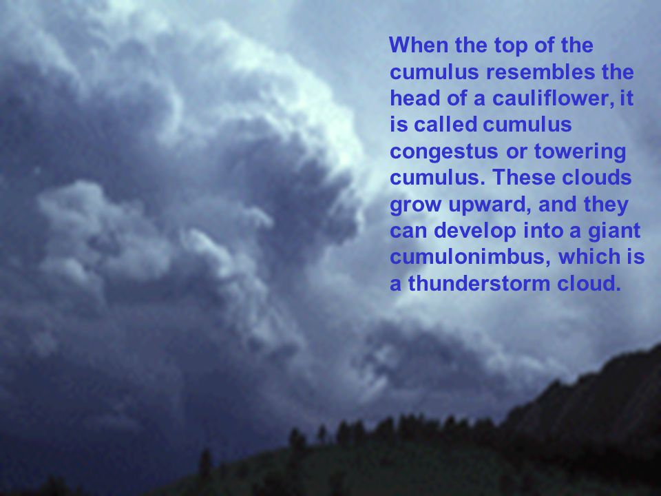 When the top of the cumulus resembles the head of a cauliflower, it is called cumulus congestus or towering cumulus.