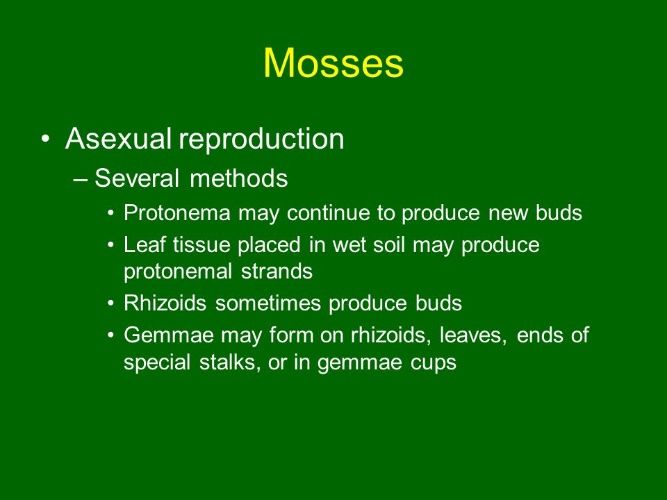 Sexual Reproduction In Bryophytes