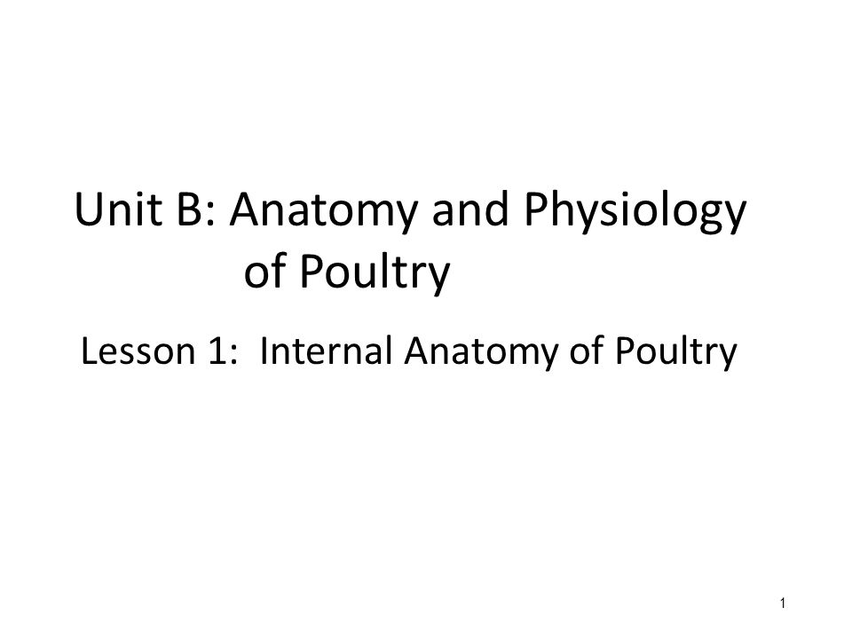 Unit B: Anatomy and Physiology of Poultry - ppt video online download