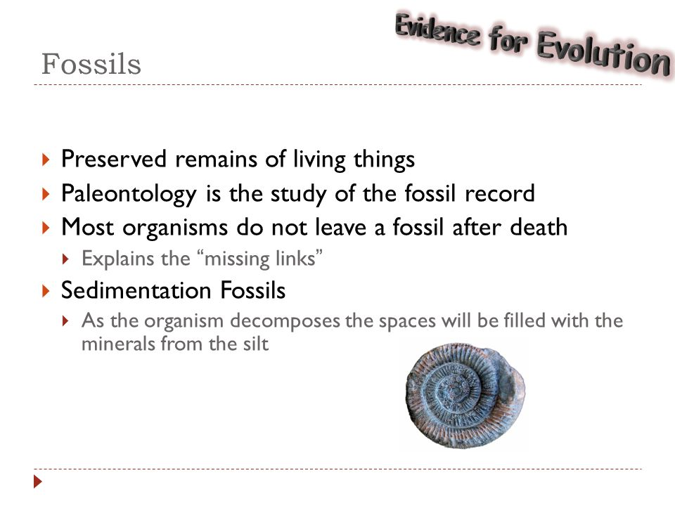 dating of fossils evolution