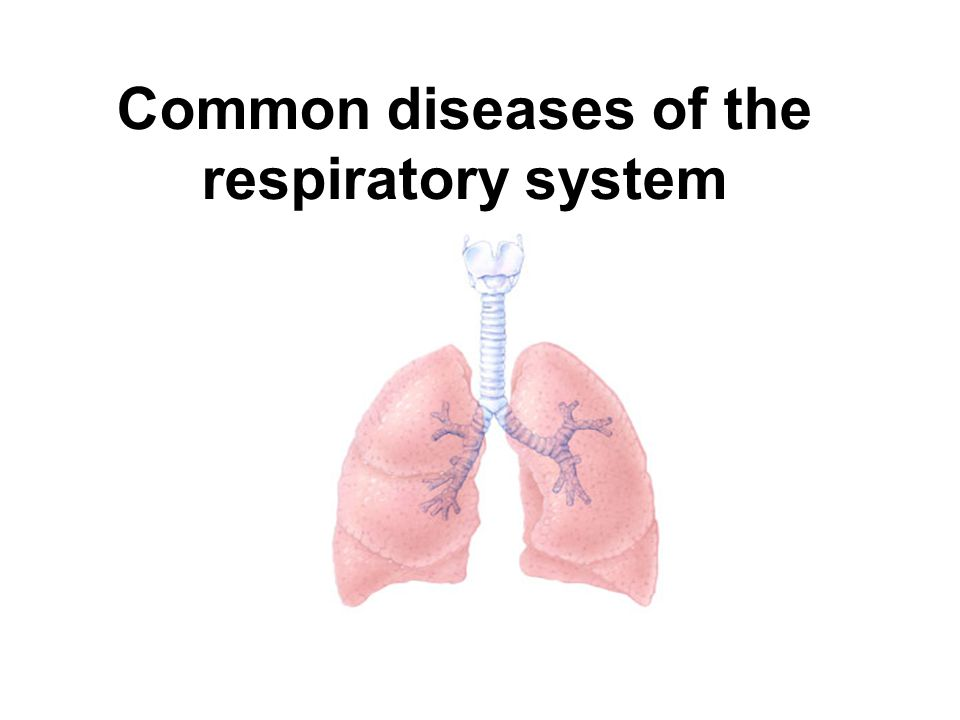 disease respiratory system essay Respiratory system essay - benefit from our affordable custom dissertation writing services and benefit from unbelievable quality give your assignments to the most.