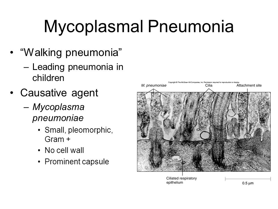 mycoplasma pneumoniae In adults, there are occasional reports of mycoplasma pneumoniae induced  bronchiolitis here we report a case of m pneumoniae bronchiolitis.