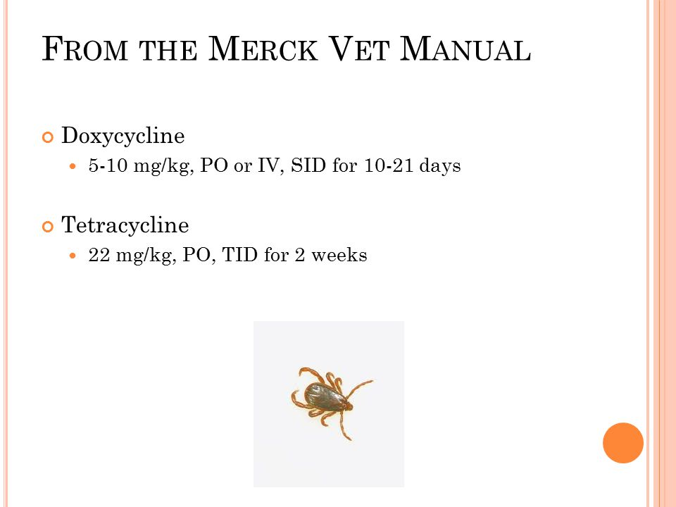 Rocky Mountain Spotted Fever Ppt Video Online Download