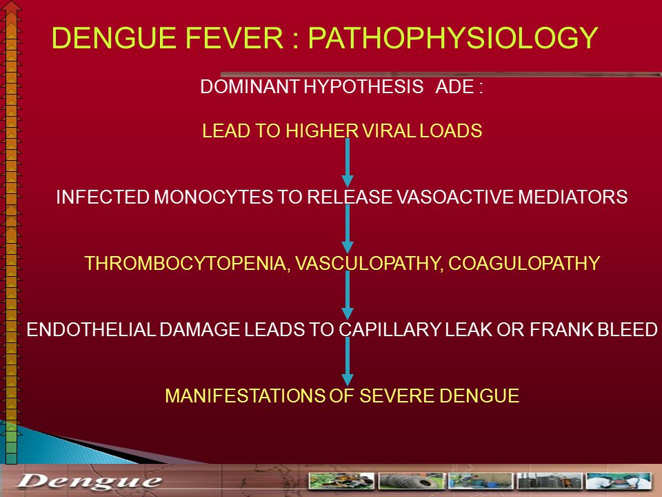 pathophysiology of dengue hemorrhagic fever The symptoms of dengue hemorrhagic fever can trigger dengue shock syndrome dengue shock syndrome is severe, and can lead to excessive bleeding and even death how to prevent dengue fever.