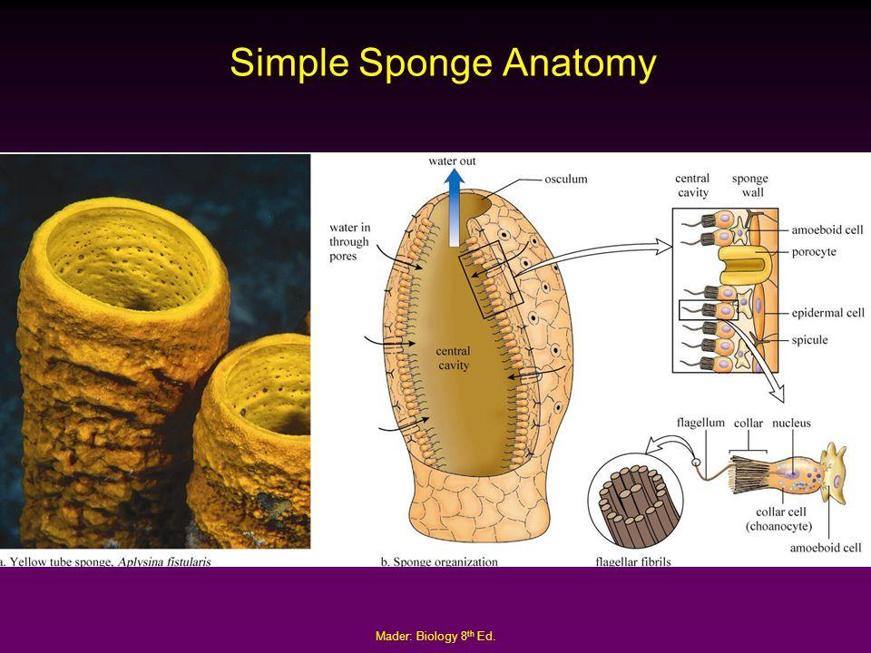 Invertebrate Anatomy Online 9533278 Follow4morefo