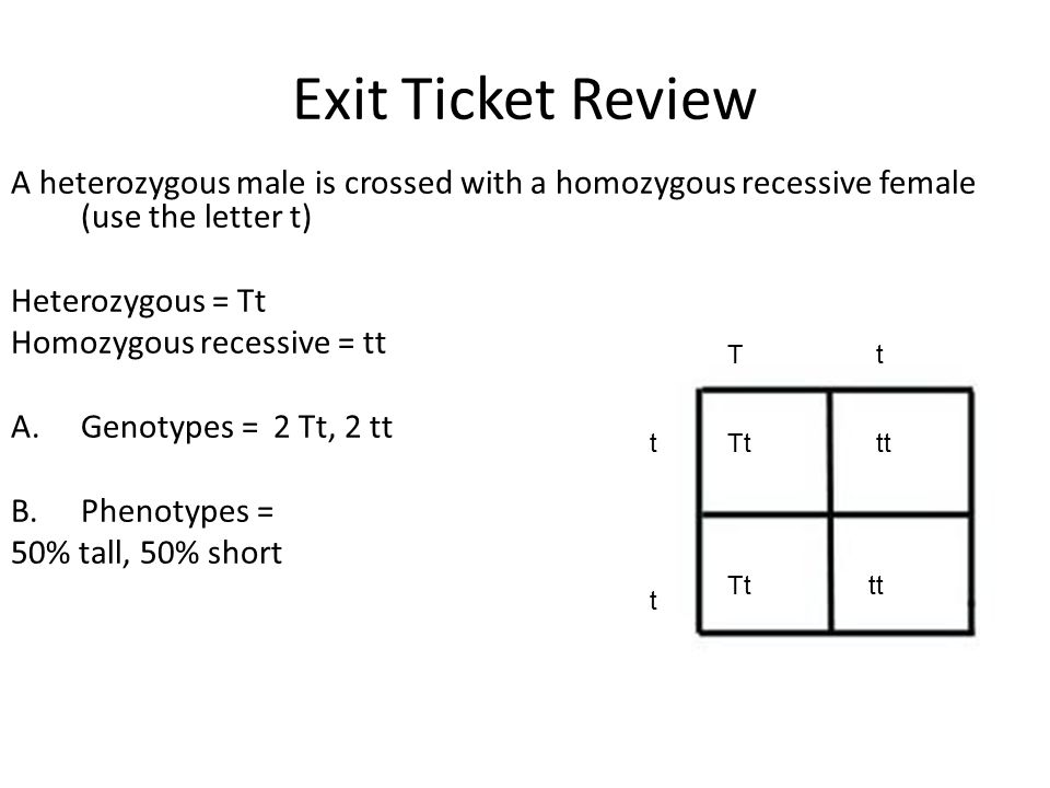 write a homozygous dominant genotype using the letter g
