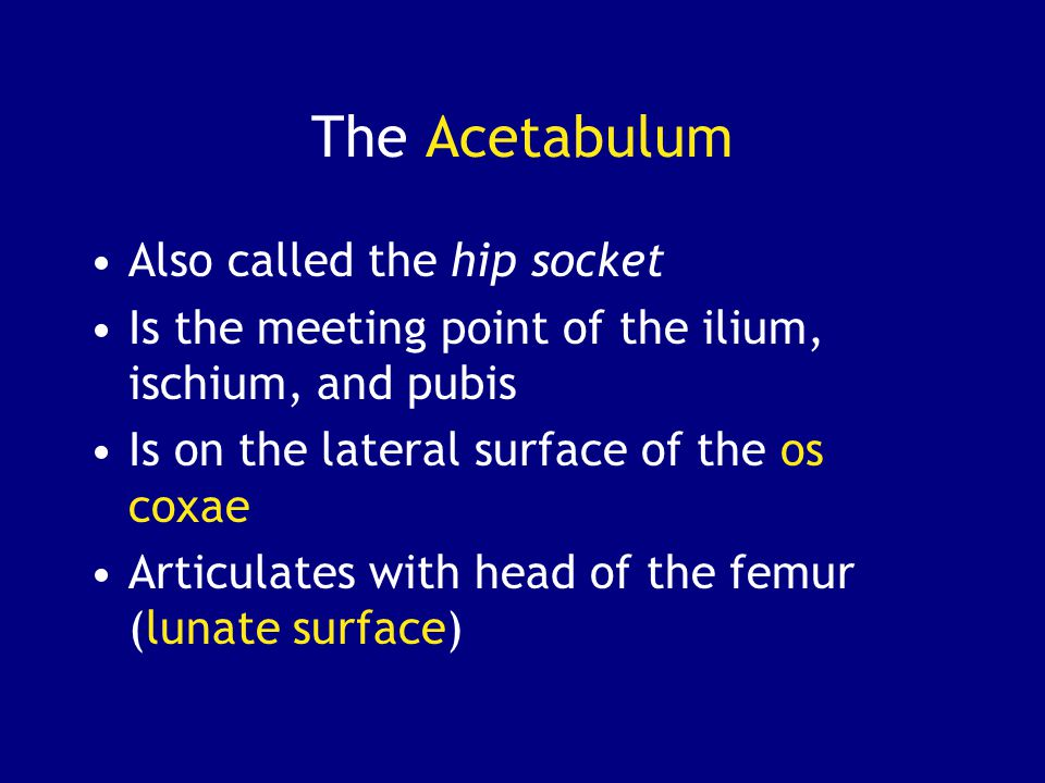 The Acetabulum Also called the hip socket