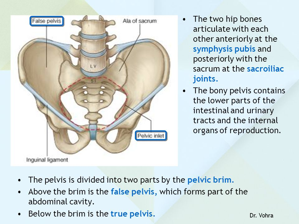 PELVIC WALLS, FLOOR; & JOINTS - ppt video online download