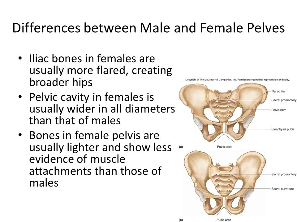 a comparison between male and female