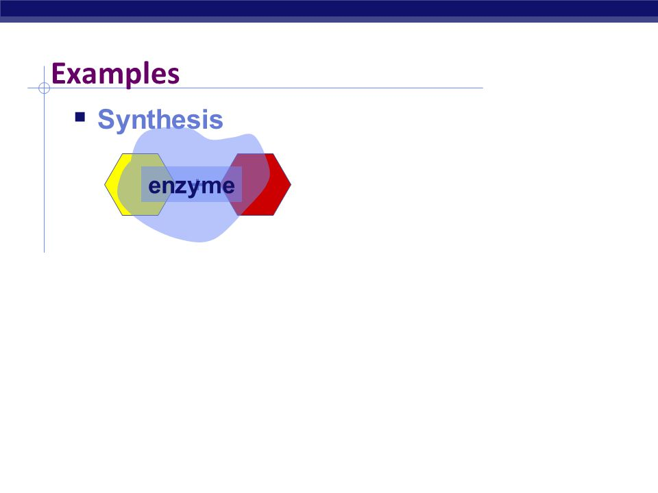 Examples Synthesis enzyme + Digestion enzyme +