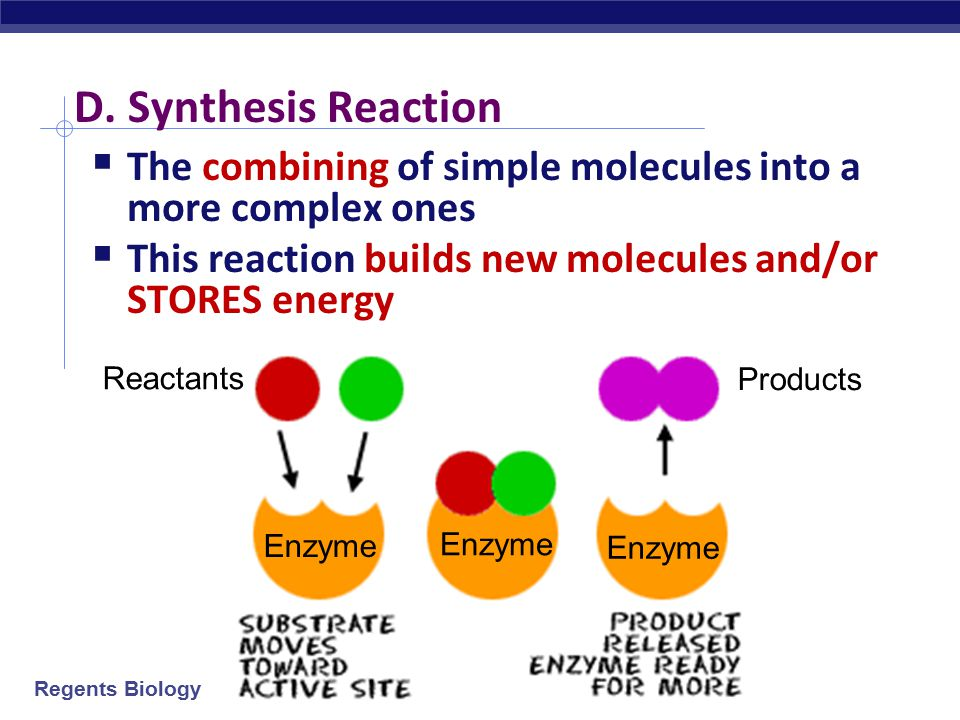 D. Synthesis Reaction The combining of simple molecules into a more complex ones. This reaction builds new molecules and/or STORES energy.