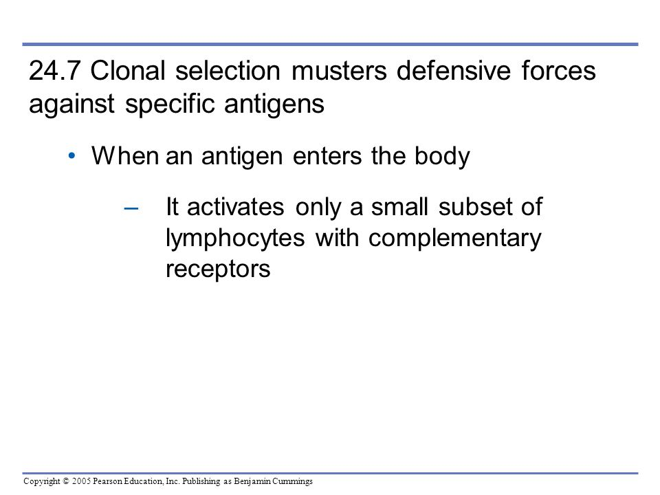 24.7 Clonal selection musters defensive forces against specific antigens When an antigen enters the body.