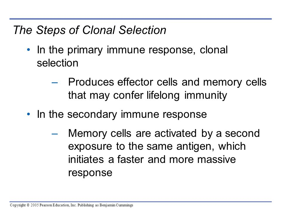 The Steps of Clonal Selection